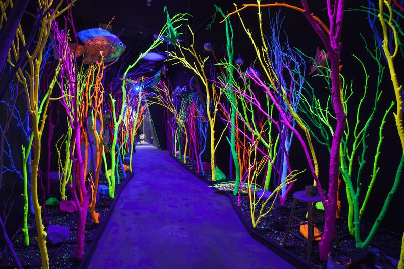 Photo by Lindsey Kennedy/Meow Wolf.